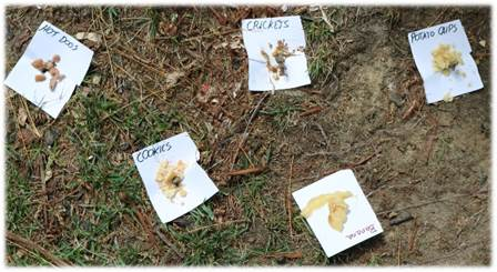 Hot dogs, cookies, potato chips, banana, & crickets were placed in grass and on the sidewalk.